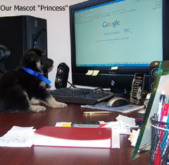 princess seo - بالا بردن آمار بازدید سایت یا بلاگ خود