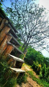 location garden photography andisheh no studio ateliye mansion emarat 198 169x300 - location garden photography andisheh no studio ateliye mansion emarat (198)