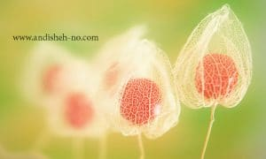 what is macro photography andisheh no 1 300x180 - What is macro photography - andisheh no (1)