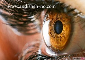 what is macro photography andisheh no 13 300x212 - عکاسی ماکرو چیست