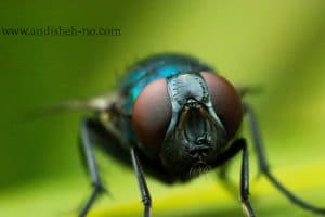 what is macro photography andisheh no 7 300x200 - What is macro photography - andisheh no (7)