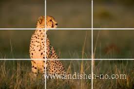 how to take photos 2 - How to take photos (2)
