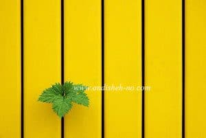what is minimalist photography 7 300x201 - What is minimalist photography (7)