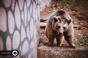 photography zoo animals tehran eram  33 300x200 - photography_Zoo_Animals_Tehran_eram_ باغ وحش حیوانات تهران ارم - نیما نصیری - آتلیه اندیشه نو - عکاسی (۳۳)
