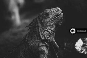 photography zoo animals tehran eram  chameleons 14 300x200 - Animals_zoo_photography