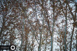 photography zoo animals tehran eram autumn leaves tree 30 300x200 - photography_Zoo_Animals_Tehran_eram_Autumn leaves tree برگ پائیز درخت باغ وحش حیوانات تهران ارم - نیما نصیری - آتلیه اندیشه نو - عکاسی (۳۰)