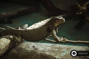 photography zoo animals tehran eram chameleons 13 300x200 - عکاسی حیوانات و حیات وحش