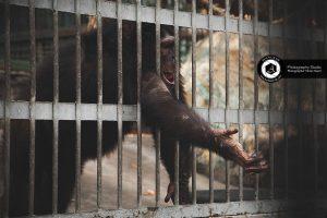 photography zoo animals tehran eram monkey 5 300x200 - عکاسی حیوانات و حیات وحش
