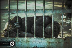 photography zoo animals tehran eram monkey 7 300x200 - Animals_zoo_photography